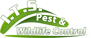 I.T.S. Pest & Wildlife Control - Pest And Wildlife Control Serving All Of Massachusetts -617-640-4202